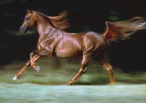 Images of the various types and sizes of horse